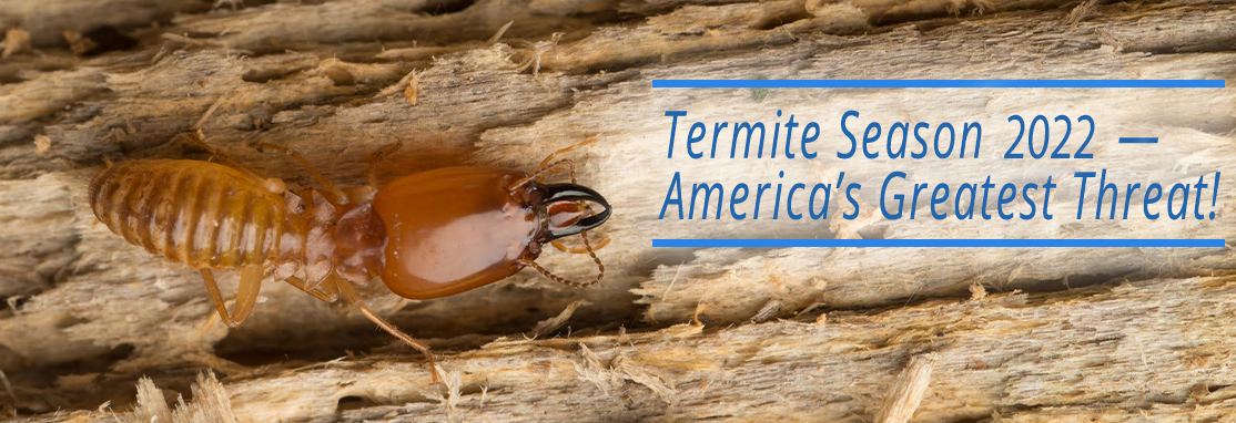 Termite Season 2020 — Protect Your Home Today!
