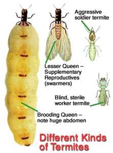 About Termites - Regional Pest Management